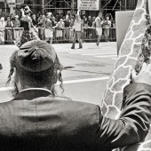 08_xxx_Orthodox Giraffe, New York City, 2012